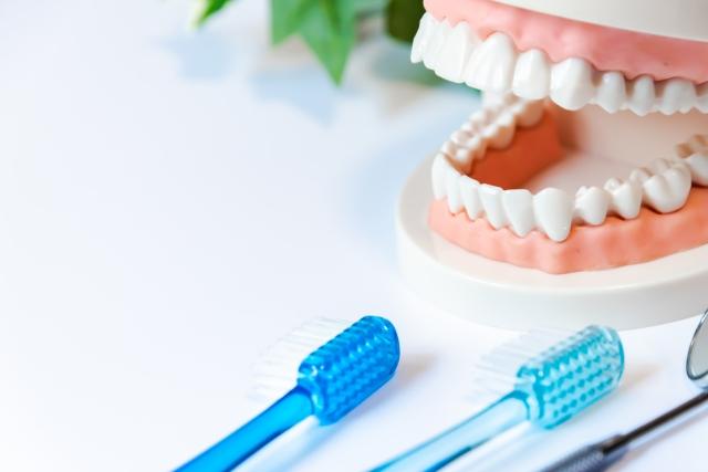 歯ブラシと白い歯の模型